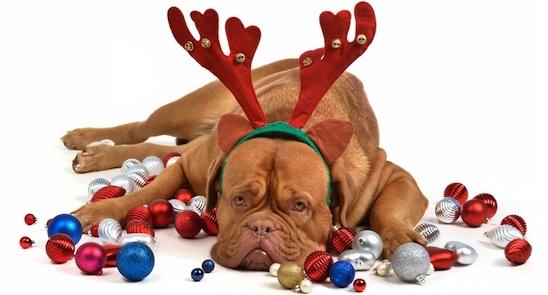 Sad Christmas Card Blank Template Imgflip