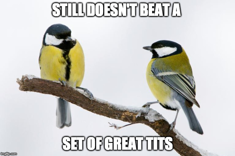 STILL DOESN'T BEAT A SET OF GREAT TITS | made w/ Imgflip meme maker