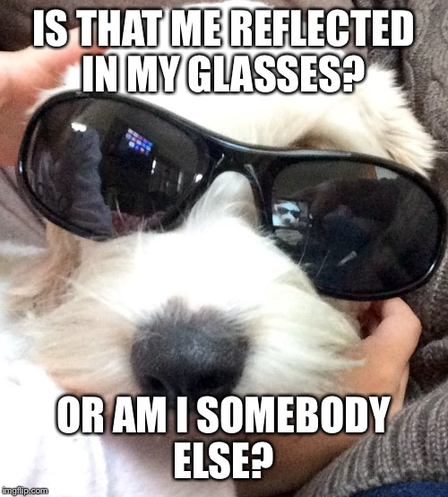 Surreal dog | IS THAT ME REFLECTED IN MY GLASSES? OR AM I SOMEBODY ELSE? | image tagged in dog,stoned,sunglasses | made w/ Imgflip meme maker