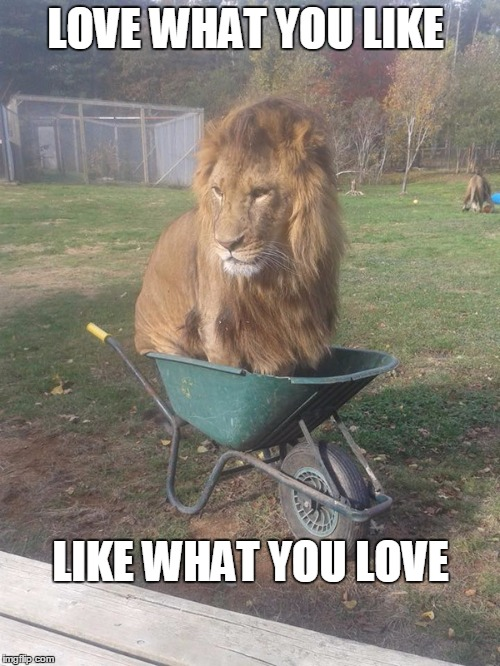Motivational quote lion | LOVE WHAT YOU LIKE LIKE WHAT YOU LOVE | image tagged in motivational quote lion | made w/ Imgflip meme maker