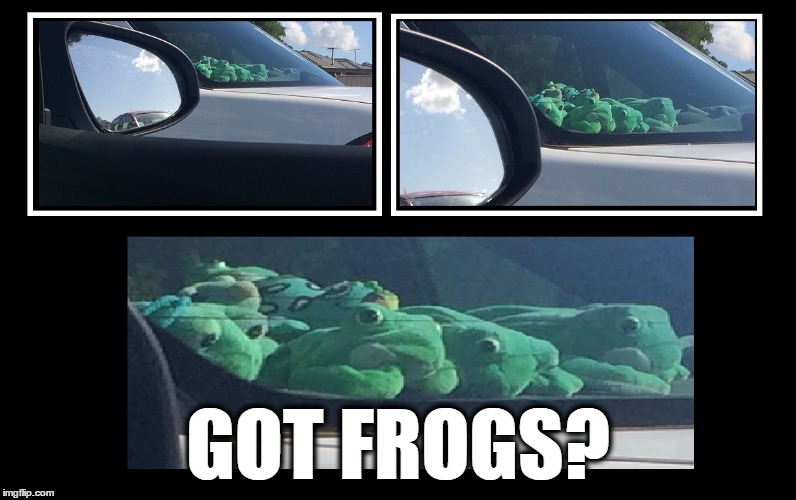 Got Frogs? | GOT FROGS? | image tagged in gotfrogs,frogs,got,squad,squad goals,goals | made w/ Imgflip meme maker