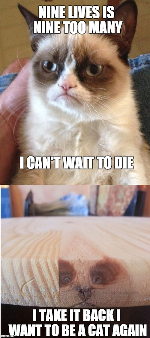 Epic reincarnation fail | NINE LIVES IS NINE TOO MANY I TAKE IT BACK I WANT TO BE A CAT AGAIN I CAN'T WAIT TO DIE | image tagged in memes,meme,grumpy cat,crotchgoblin,funny | made w/ Imgflip meme maker