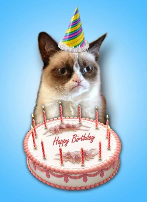 vj2mp grumpy cat birthday blank template imgflip