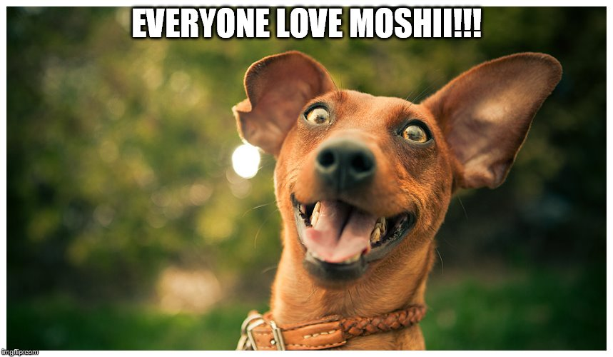 crazy mutt | EVERYONE LOVE MOSHII!!! | image tagged in crazy mutt | made w/ Imgflip meme maker