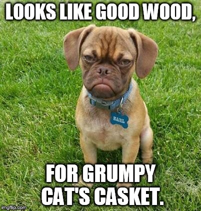 LOOKS LIKE GOOD WOOD, FOR GRUMPY CAT'S CASKET. | made w/ Imgflip meme maker