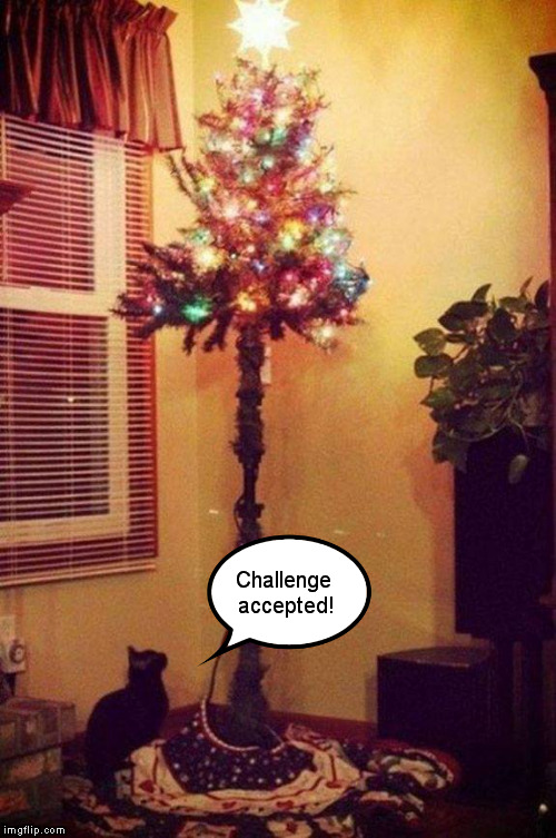 Cats and christmas trees challenge accepted image tagged in funny