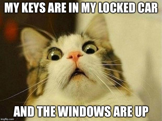 Scared Cat Meme | MY KEYS ARE IN MY LOCKED CAR AND THE WINDOWS ARE UP | image tagged in memes,scared cat | made w/ Imgflip meme maker