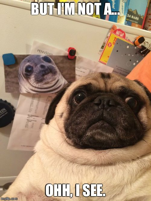 Awkward moment pug | BUT I'M NOT A... OHH, I SEE. | image tagged in awkward moment pug | made w/ Imgflip meme maker