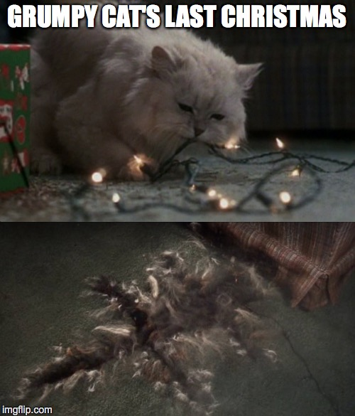 christmas vacation cat meme