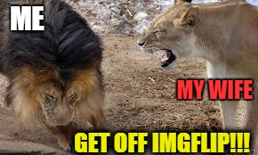 Spending too much time on Imgflip (secretly attempting the elusive Front Page). | ME GET OFF IMGFLIP!!! MY WIFE | image tagged in lion yelling,wife,meme,funny lion,imgflip | made w/ Imgflip meme maker