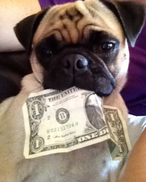 pug with money blank template imgflip