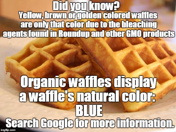 Essay Waffle | Yellow, brown or golden colored waffles are only that color due to the bleaching agents found in Roundup and other GMO products Organic waff | image tagged in essay waffle | made w/ Imgflip meme maker
