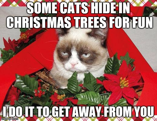 Grumpy Cat Mistletoe | SOME CATS HIDE IN CHRISTMAS TREES FOR FUN I DO IT TO GET AWAY FROM YOU | image tagged in memes,grumpy cat mistletoe,grumpy cat | made w/ Imgflip meme maker