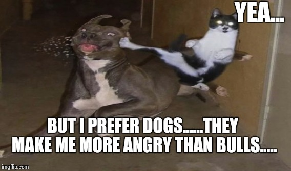 YEA... BUT I PREFER DOGS......THEY MAKE ME MORE ANGRY THAN BULLS..... | made w/ Imgflip meme maker