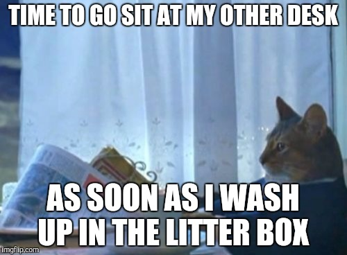 I Should Buy A Boat Cat Meme | TIME TO GO SIT AT MY OTHER DESK AS SOON AS I WASH UP IN THE LITTER BOX | image tagged in memes,i should buy a boat cat | made w/ Imgflip meme maker
