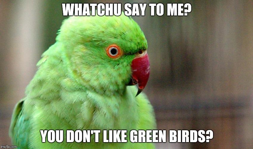 vowxm whatchu say to me bird memes imgflip