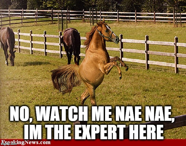 NO, WATCH ME NAE NAE, IM THE EXPERT HERE | image tagged in nae nae horse | made w/ Imgflip meme maker