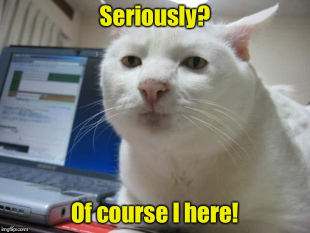 Serious Cat | Seriously? Of course I here! | image tagged in serious cat | made w/ Imgflip meme maker