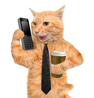 business cat blank template imgflip