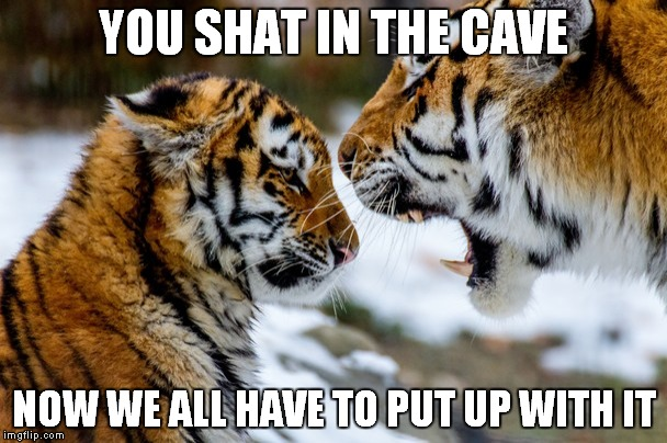 Funny Memes For Kids Animals : Bad tiger imgflip