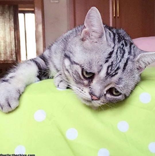 sad cat Blank Template - Imgflip