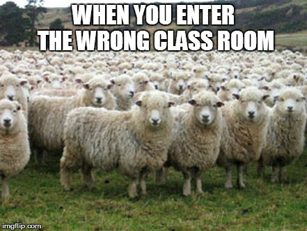 Wrong class room | WHEN YOU ENTER THE WRONG CLASS ROOM | image tagged in memes,animals,sheep | made w/ Imgflip meme maker