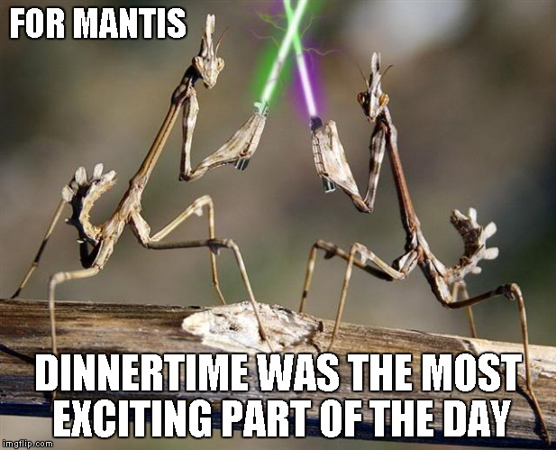 Once he became a Jedi, Mantis knew all the chicks would want his head. | FOR MANTIS DINNERTIME WAS THE MOST EXCITING PART OF THE DAY | image tagged in mantis with lightsabers,star wars,insects,funny animals,funny | made w/ Imgflip meme maker