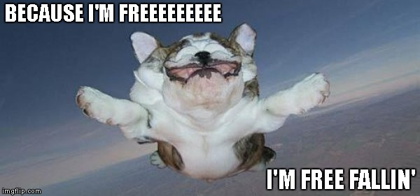 This meme got me all in a Tom Petty kind of mood. | BECAUSE I'M FREEEEEEEEE I'M FREE FALLIN' | image tagged in dog free falling,dog,funny,funny dogs,funny animals | made w/ Imgflip meme maker