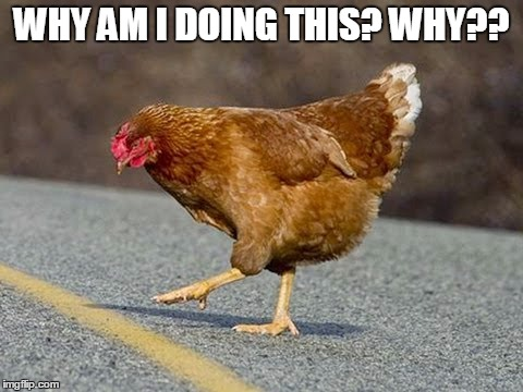 Ho Hum | WHY AM I DOING THIS? WHY?? | image tagged in chicken,cross the road,why,contemplating,chov | made w/ Imgflip meme maker