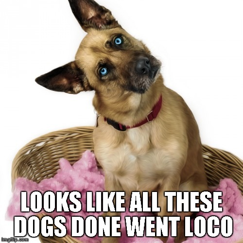 LOOKS LIKE ALL THESE DOGS DONE WENT LOCO | made w/ Imgflip meme maker