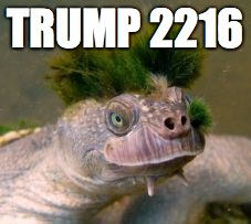 vubaf donald trump turtle meme generator imgflip,Turtle Meme Generator