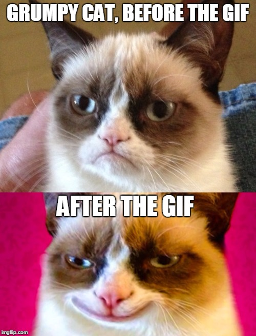 GRUMPY CAT, BEFORE THE GIF AFTER THE GIF | made w/ Imgflip meme maker