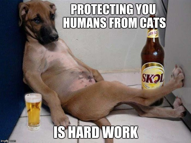 dog needs a break | PROTECTING YOU HUMANS FROM CATS IS HARD WORK | image tagged in dogs vs cats,dog,lazy dog | made w/ Imgflip meme maker