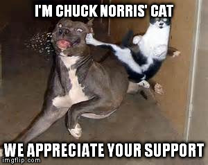 I'M CHUCK NORRIS' CAT WE APPRECIATE YOUR SUPPORT | made w/ Imgflip meme maker