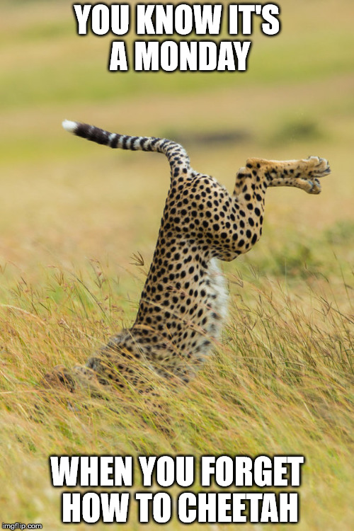 Cheetah Splat | YOU KNOW IT'S A MONDAY WHEN YOU FORGET HOW TO CHEETAH | image tagged in mondays,cheetah,splat | made w/ Imgflip meme maker