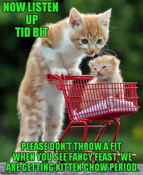 Parenting | NOW LISTEN UP TID BIT PLEASE DON'T THROW A FIT WHEN YOU SEE FANCY FEAST. WE ARE GETTING KITTEN CHOW PERIOD. | image tagged in cute kittens,shopping cart,funny | made w/ Imgflip meme maker