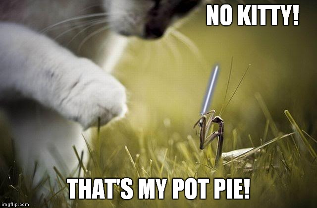 NO KITTY! THAT'S MY POT PIE! | made w/ Imgflip meme maker