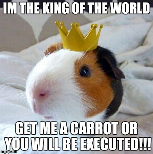 guinea pig | IM THE KING OF THE WORLD GET ME A CARROT OR YOU WILL BE EXECUTED!!! | image tagged in guinea pig | made w/ Imgflip meme maker