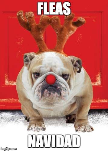 Christmas Hound - Imgflip