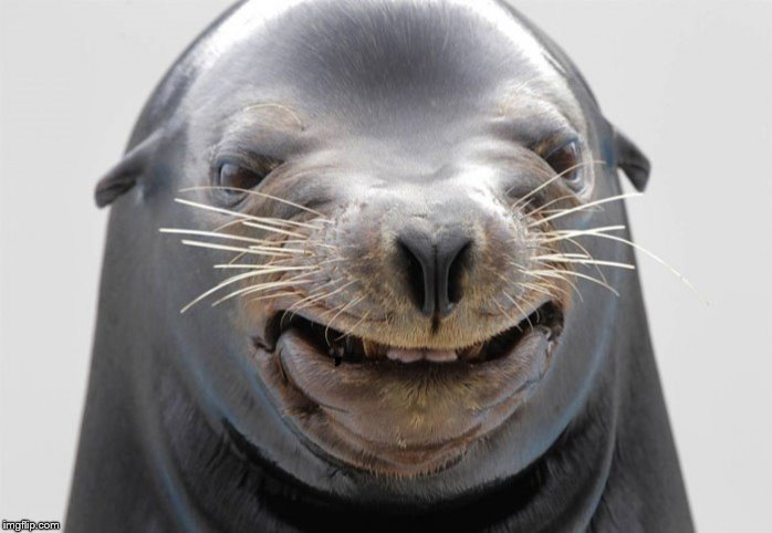happy seal | , | image tagged in happy seal | made w/ Imgflip meme maker