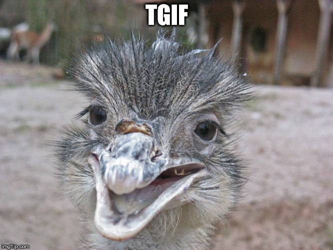 TGIF | TGIF | image tagged in tgif,tired,weekend,stoned,emu | made w/ Imgflip meme maker