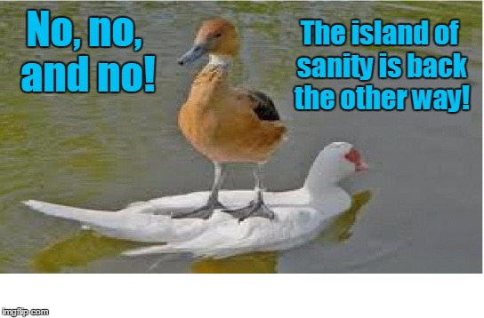 A long time ago, in a duck pond far, far away... | No, no, and no! The island of sanity is back the other way! | image tagged in memes,insane,duck,duck surfing,welcome to imgflip | made w/ Imgflip meme maker