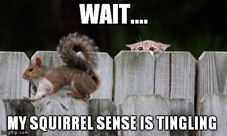 Spidey Squirrel  | WAIT.... MY SQUIRREL SENSE IS TINGLING | image tagged in squirrel,cats,funny,spidey | made w/ Imgflip meme maker