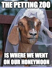 Muslim Goat Bride | THE PETTING ZOO IS WHERE WE WENT ON OUR HONEYMOON | image tagged in muslim goat bride | made w/ Imgflip meme maker