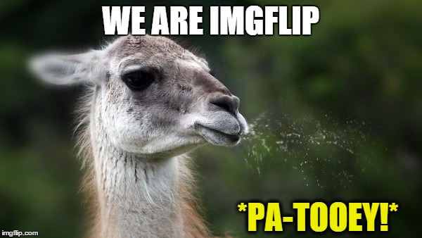 Funny spitting llama | WE ARE IMGFLIP *PA-TOOEY!* | image tagged in funny spitting llama | made w/ Imgflip meme maker