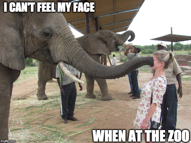 The Weeknd Outing | I CAN'T FEEL MY FACE WHEN AT THE ZOO | image tagged in music,pop music,elephant,funny | made w/ Imgflip meme maker