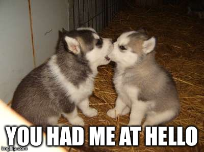 Cute Puppies Meme | YOU HAD ME AT HELLO | image tagged in memes,cute puppies | made w/ Imgflip meme maker