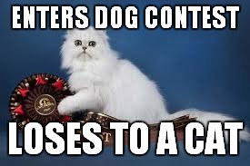 ENTERS DOG CONTEST LOSES TO A CAT | made w/ Imgflip meme maker