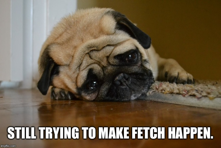 Sad Dog | STILL TRYING TO MAKE FETCH HAPPEN. | image tagged in sad dog | made w/ Imgflip meme maker