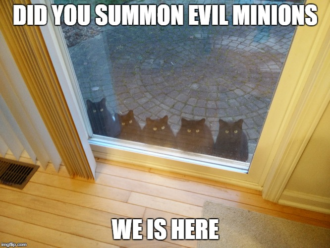evil minions | DID YOU SUMMON EVIL MINIONS WE IS HERE | image tagged in black cat,minions | made w/ Imgflip meme maker